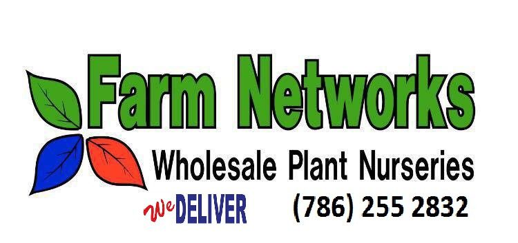 25-Gallon-Wholesale Clusia Plants